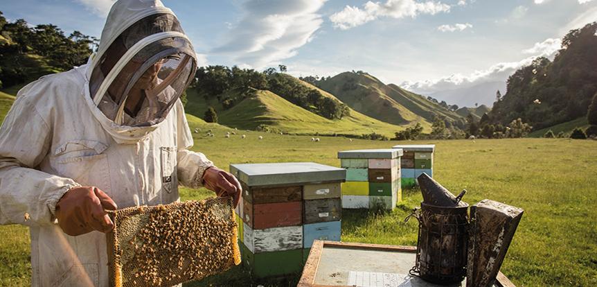 new zealand apiary