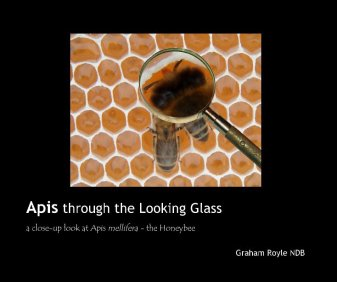 apis thorugh the looking glass